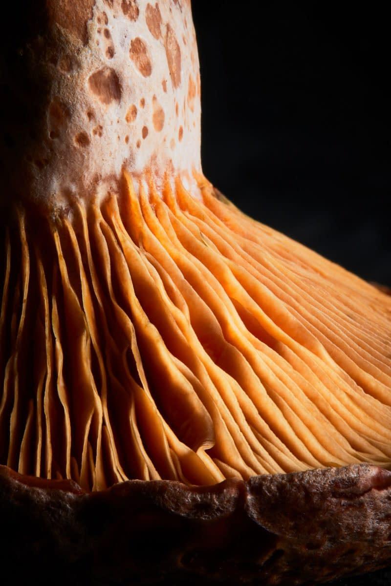 Macro Food Photographer Melbourne