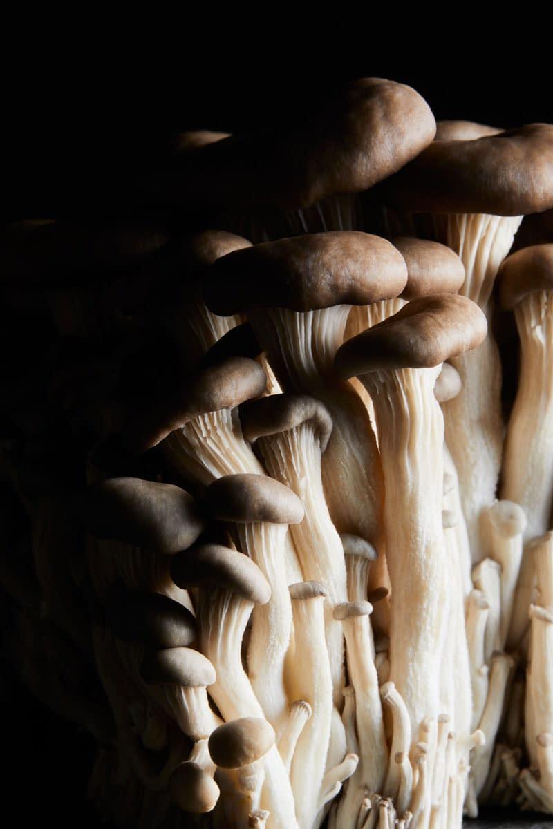 Mushroom Photographer Melbourne